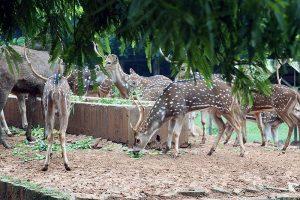 Dhaka_Zoo