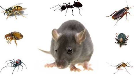 pest-control-bangladesh