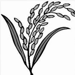 bnp election symbol sheaf of paddy