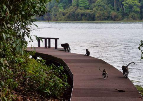MacRitchie Reservoir, visit in Singapore.