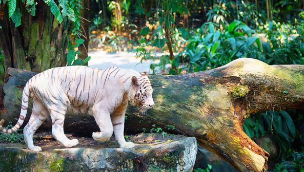 Singapore Zoo.
